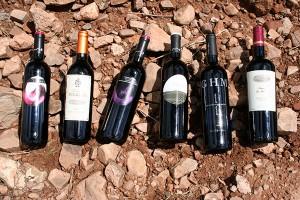 vinos cariñena hacienda molleda